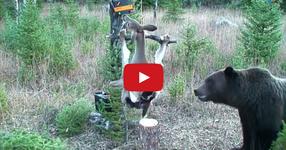 Ловец постави капан, който удря ток! В крайна сметка, мечката се оказа доста хитро животно! ВИЖТЕ ЗАЩО! (ВИДЕО)