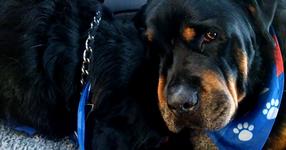 ВИДЕОТО, което успя да трогне целия СВЯТ! Куче се разплака за брат си, с който са били заедно цял живот (ВИДЕО)