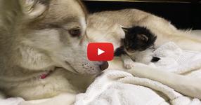 Коте сирак пристига в новият си дом. Гледайте какво се случва, когато собствениците го запознават с тяхното куче! (ВИДЕО)