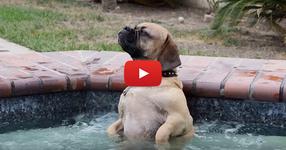 Семейство си купи джакузи. През сълзи ще се смеете, когато видите какво прави кучето влизайки за първи път в джакузито! (ВИДЕО)