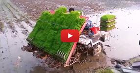 Китайците пак убиха рибата! Гледайте каква машина са направили за садене на трева! (ВИДЕО)