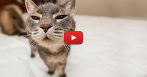 ЩЕ ЛЕГНЕТЕ НА ЗЕМЯТА от СМЯХ, когато видите какво правят тези котки! (ВИДЕО)
