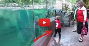 Момченцето си играеше в предната част на аквариума в зоологическата градина. Никой обаче не очакваше да се случи това! (ВИДЕО)