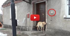 Това куче иска да влезе в къщата, но никой не му отваря. Вижте до къде стига интелигентността му! (ВИДЕО)