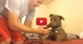 Той спасява малко новородено коте и го представя на кучето си. Реакцията на питбула е безценна! (ВИДЕО)