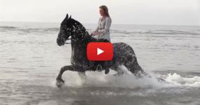 Едно от най-хубавите видеа, правени някога с фризийски коне. Няма да се уморите да го гледате! (ВИДЕО)