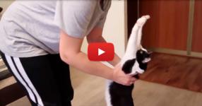 Това е най-милото нещо, което ще видите днес! Вижте как тази котка показва обичта си към стопанката си (ВИДЕО)