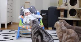 Родители доведоха новороденото им бебе вкъщи. Реакциите на техните котки надхвърли очакванията им! (ВИДЕО)