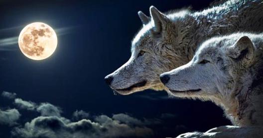 притча за 2 вълка