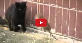 В Русия и плъховете са опасни! ГЛЕДАЙТЕ КАКВО СТАВА... (ВИДЕО)