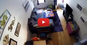 Той постави камера в апаратамента си, за да контролира котките, но записа нещо неочавано... (ВИДЕО)