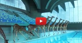 Това видео ще ви остави без думи. Гледайте какво прави този жираф... Просто НЕВЕРОЯТНО! (ВИДЕО)