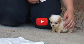 Това мъничко кученце е толкова сладко, но почакай да видиш неговия най-добър приятел! (ВИДЕО)