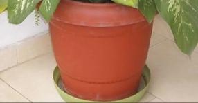 Моля, предупредете приятелите и близките си! Това домашно растение може да убие дете за по-малко от минута, а възрастни за 15 минути!