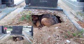 Куче отказва да си тръгне от гроба на стопанина си и остава да живее в него