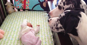 Родители оставят новородените си бебета в една стая с кучета. Когато се връщат, те заварват това... (СНИМКИ)