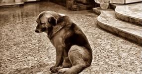 Невероятно тъжната и трогателна история за куче, което чака няколко месеца починалия си стопанин
