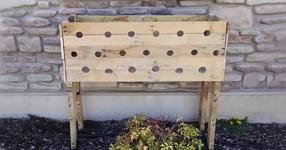 Жена направи 19 дупки в дървеното сандъче за цветя. Пет месеца по-късно? МАГИЧЕСКА КРАСОТА! (СНИМКИ)