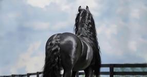 Той прилича на обикновен кон. Погледни го само как изглежда като се обърне! (СНИМКИ)