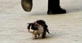 Всички се страхуваха да докоснат тази котка, но тогава той го гушна и се случи нещо невероятно!