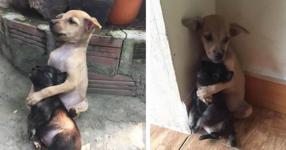 Тези бездомни кученца не спират да се прегръщат от както са спасени (СНИМКИ)