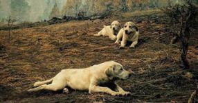 3 кучета отказват да напуснат това място след горски пожар. Но когато видите това, което те са охранявали? Уау!