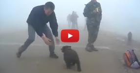 Този мъж се приближи до едно малко мече. Това, което последва обаче, никой не го очакваше! (ВИДЕО)