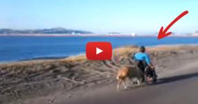 Ще останете изумени, когато видите как куче бута инвалидната количка на стопанката си! (ВИДЕО)