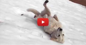 Когато видите какво видео е заснел собственикът на това куче, ще се смеете от сърце! (ВИДЕО)