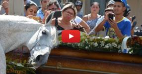 Собственикът внезапно умира, тогава конят му има невероятна реакция на погребението му... (ВИДЕО)