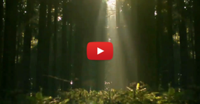 Това сензационно видео ни разкрива някои от тайните на природата. Неща, които не можем да видим с просто око! (ВИДЕО)