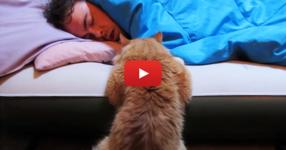 Котката иска да си играе със стопанина си. Начинът, по който тя се опитва да го събуди, е очарователен! Вижте я! (ВИДЕО)