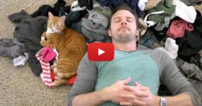 Няма начин да не харесате това видео, ако обичате котките! Вижте тези прекрасни кадри! (ВИДЕО)
