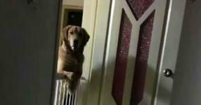 Всяка вечер това куче будува и наблюдава собствениците си, докато спят. Когато научили причината за това, те не могли да сдържат сълзите си…