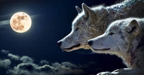 Притча за 2-та вълка! Ще я прочетеш за 20 секунди, но ще я запомниш завинаги!