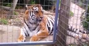 През сълзи ще се смеете, когато видите как тези животни кихат! (ВИДЕО)