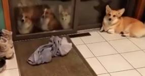 След дълга игра на двора, всичките кучета се нареждат пред входната врата. Това, което се случва след това, ще ви накара да се усмихнете! (ВИДЕО)