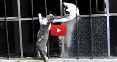 Ще останете изумени, когато видите как майка котка спасява малкото си. Някои хора трябва да вземат пример! (ВИДЕО)