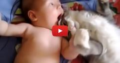 Тази котка среща за първи път малкото бебе. Нейната реакция ще ви разтопи! (ВИДЕО)