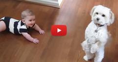 Вижте само с какви номера това куче забавлява малкото бебе! (ВИДЕО)