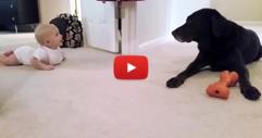 Това бебе започва да пълзи. Тогава кучето решава да го награди по най-сладкия начин! (ВИДЕО)