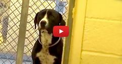 Вижте как реагира кучето, когато неговите осиновители го извеждат извън приюта на разходка! (ВИДЕО)